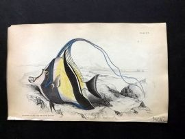 Jardine C1840 Hand Col Fish Print. Horned Zanclus or Chaetodon